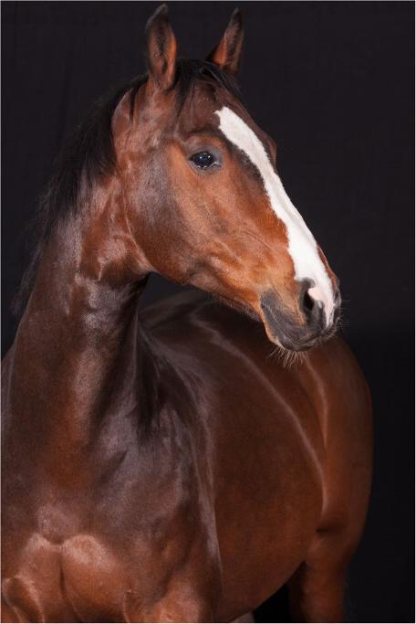 bemer decke pferd